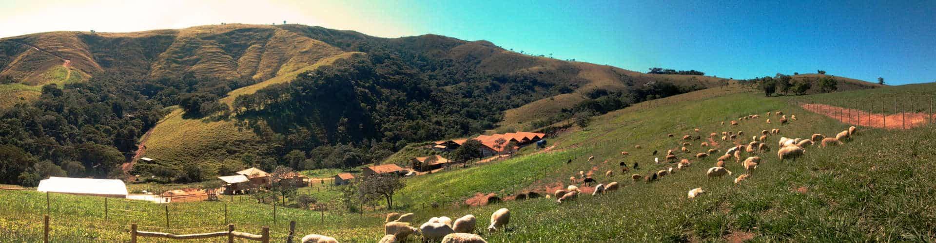 Queijos Finos de Leite de Cabra e Ovelha 1